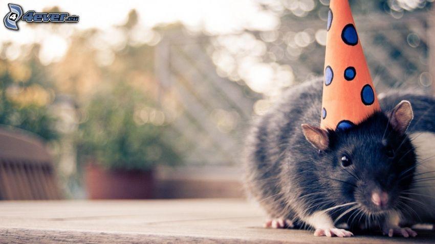 hamster, kalas