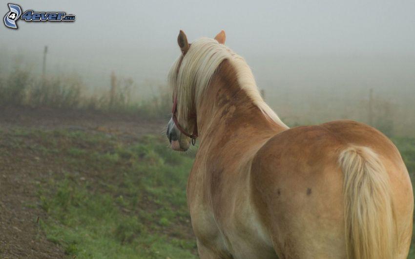 brun häst, dimma