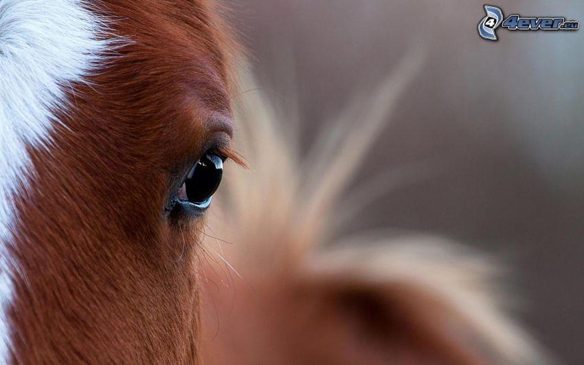 brun häst, hästöga