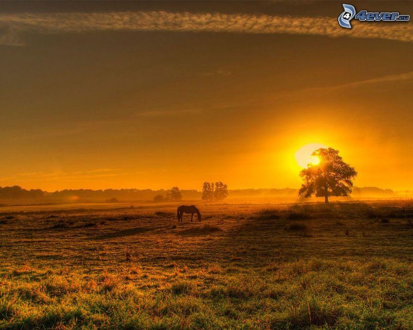 brun häst, silhuett, solnedgång, siluett av ett träd