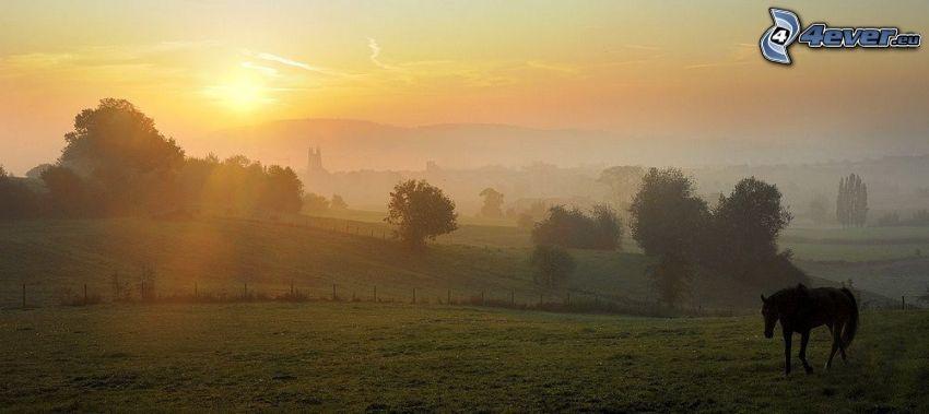 brun häst, solnedgång över äng