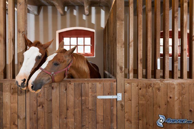 bruna hästar, stall