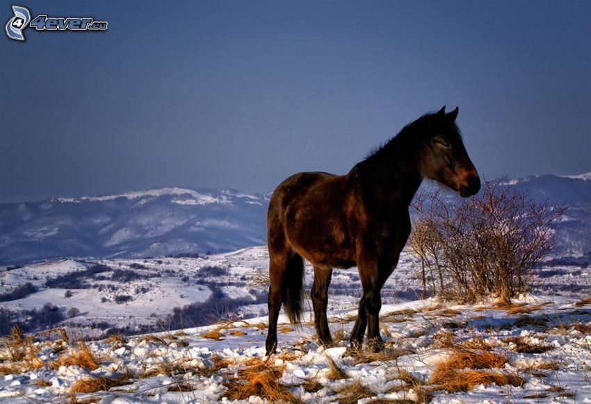 draghäst, vinterlandskap, utsikt över landskap, snö