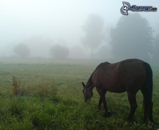 häst, äng, dimma, träd