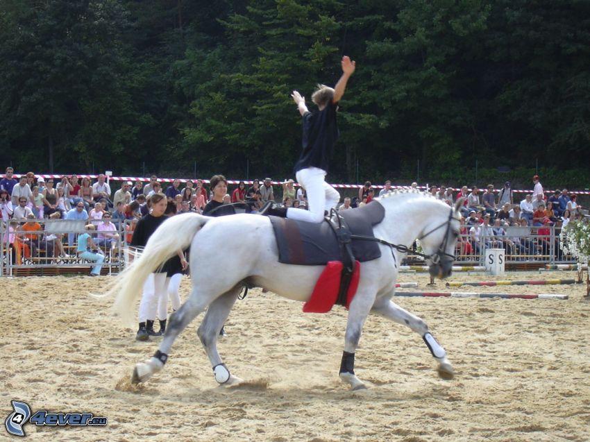 häst, ryttare