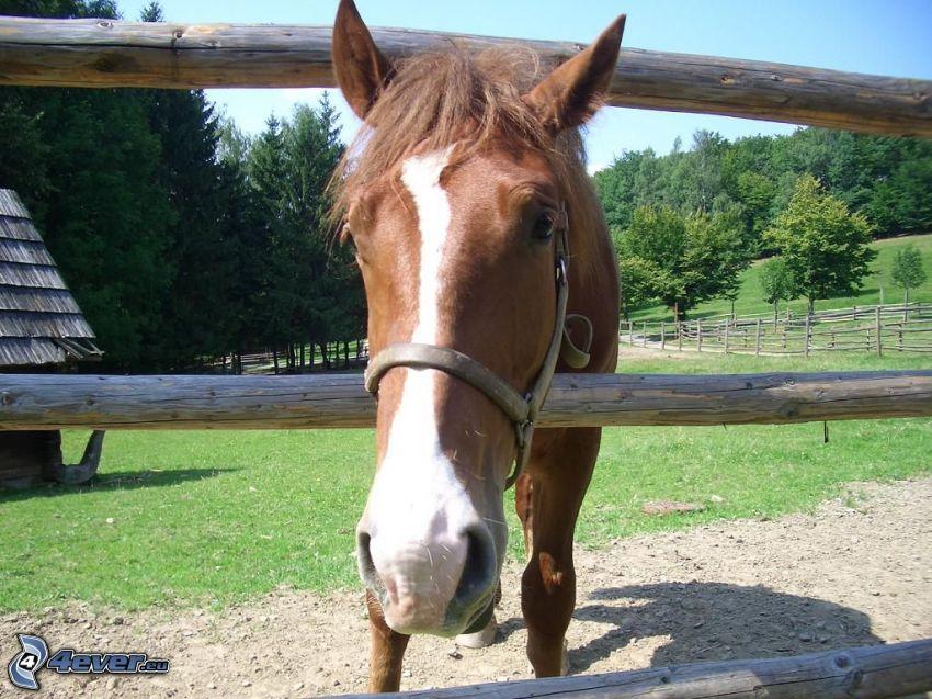 häst, staket, natur, landskap, hingst