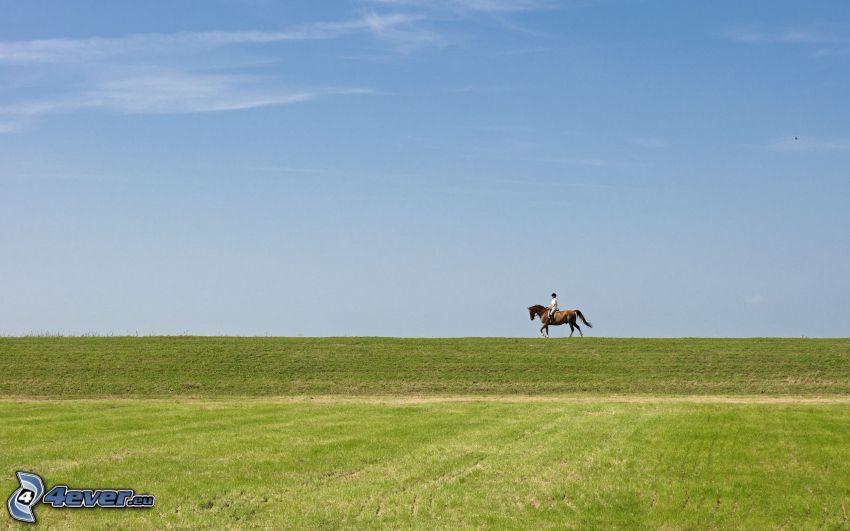 kvinna till häst, äng, horisont