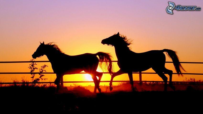 silhuetter av hästar, orange solnedgång