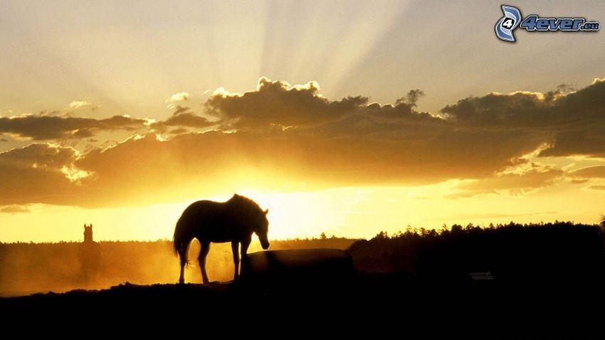 silhuetter av hästar, solnedgång, solstrålar bakom moln