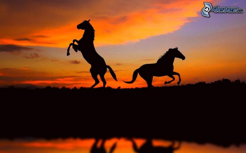 silhuetter av hästar