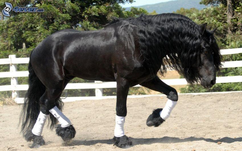 svart häst, staket