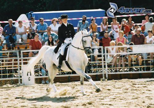vit häst, ryttare
