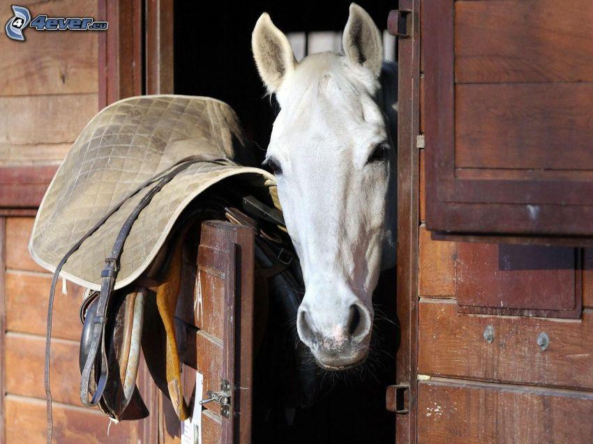vit häst, stall