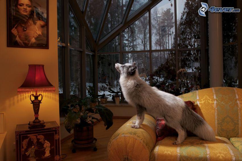 hund, bild, vardagsrum