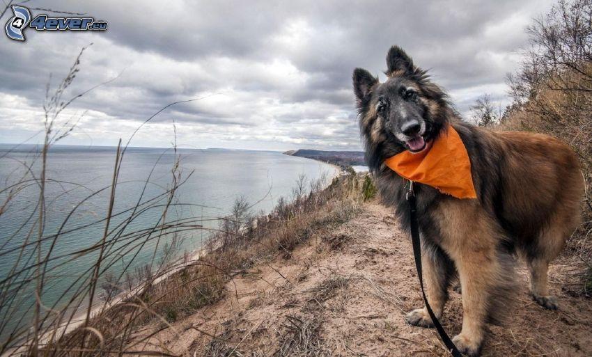 hund, halsduk, sjö, halsband
