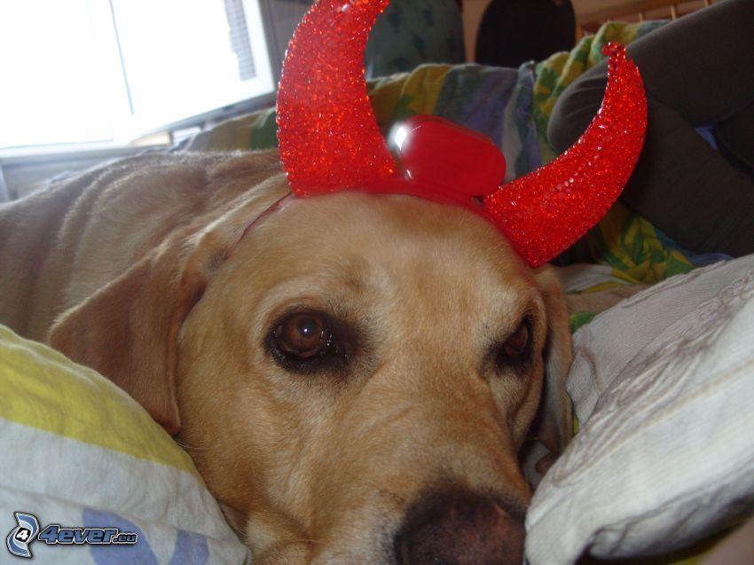 hund, horn, säng, slöande, sorg