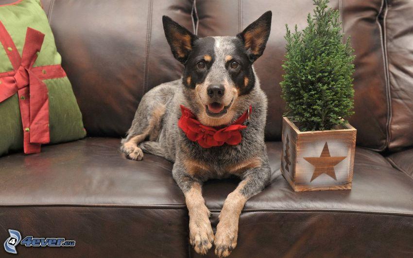 hund, soffa, bonsai