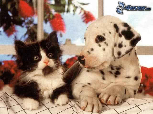 hund och katt