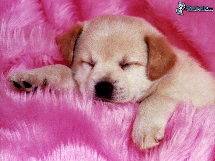 sovande valp, rosa, filt