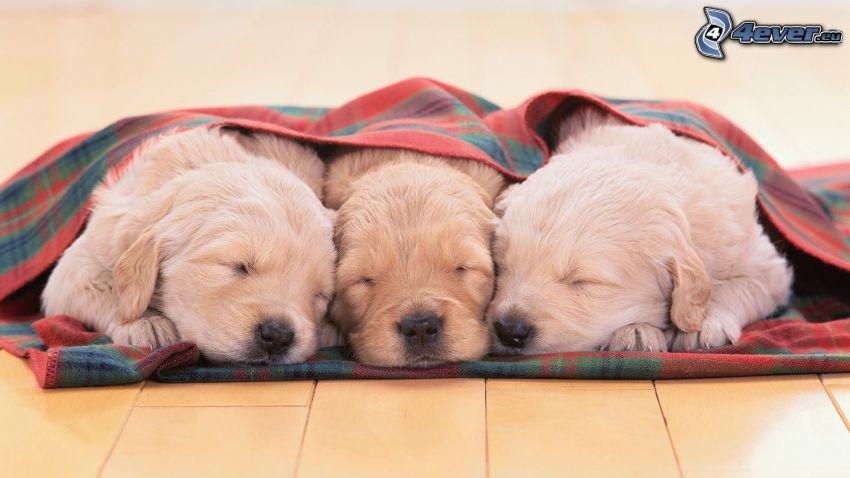 sovande valpar, filt