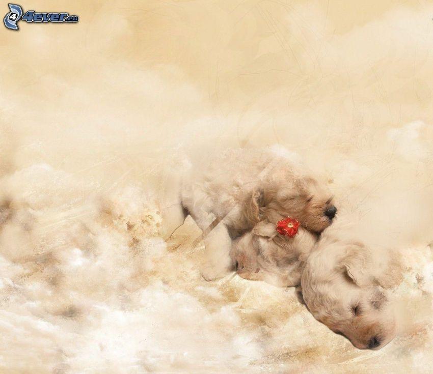 sovande valpar