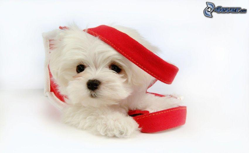 vit hund, väska