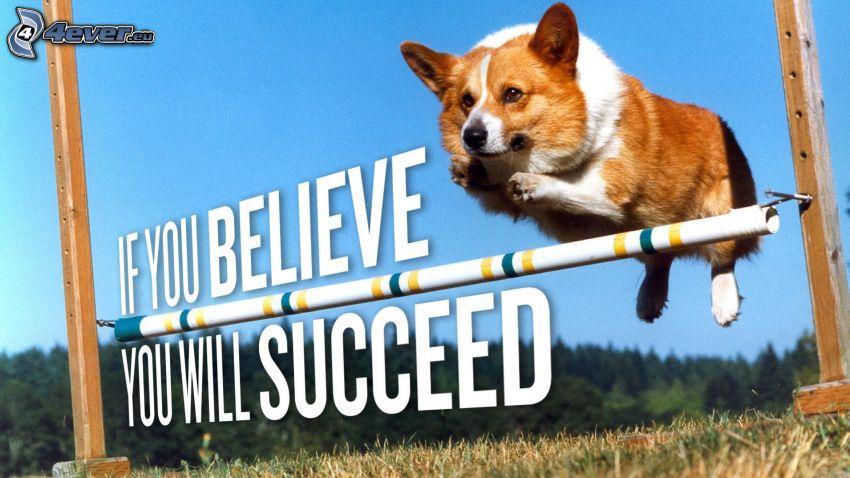 Welsh corgi, stav, hopp, text, tro, framgång