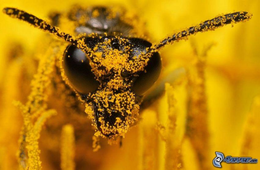 bi, pollen