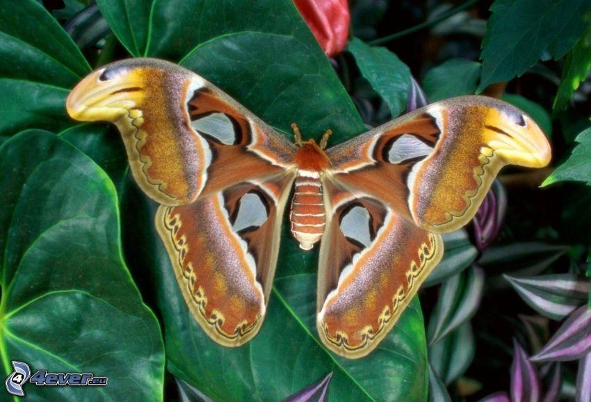 fjäril, gröna blad