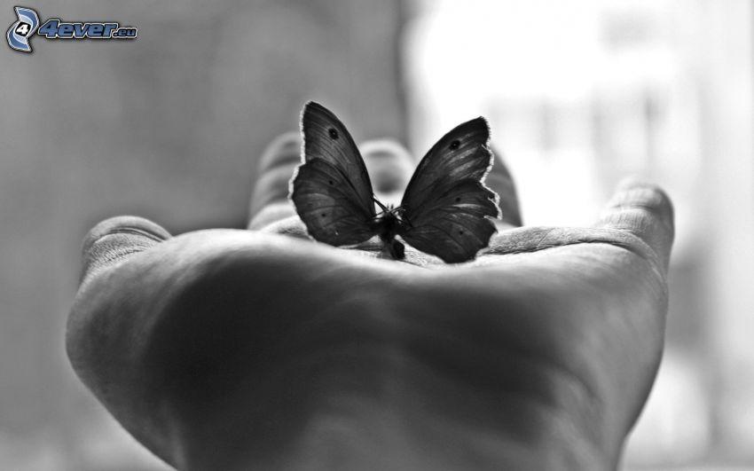 fjäril, hand, svartvitt foto