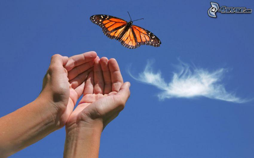 fjäril, händer