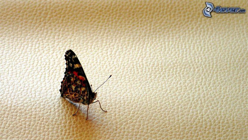 fjäril, läder