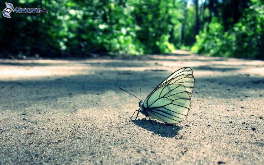 fjäril, väg