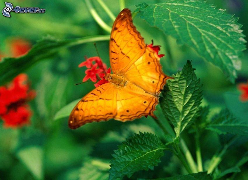 fjäril, växter, makro