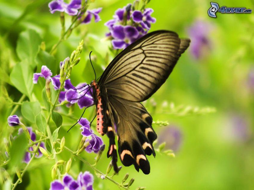 fjäril på en blomma, lila blommor