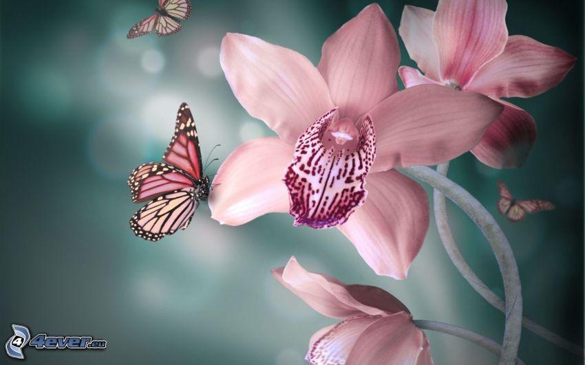 fjäril på en blomma, rosa blommor