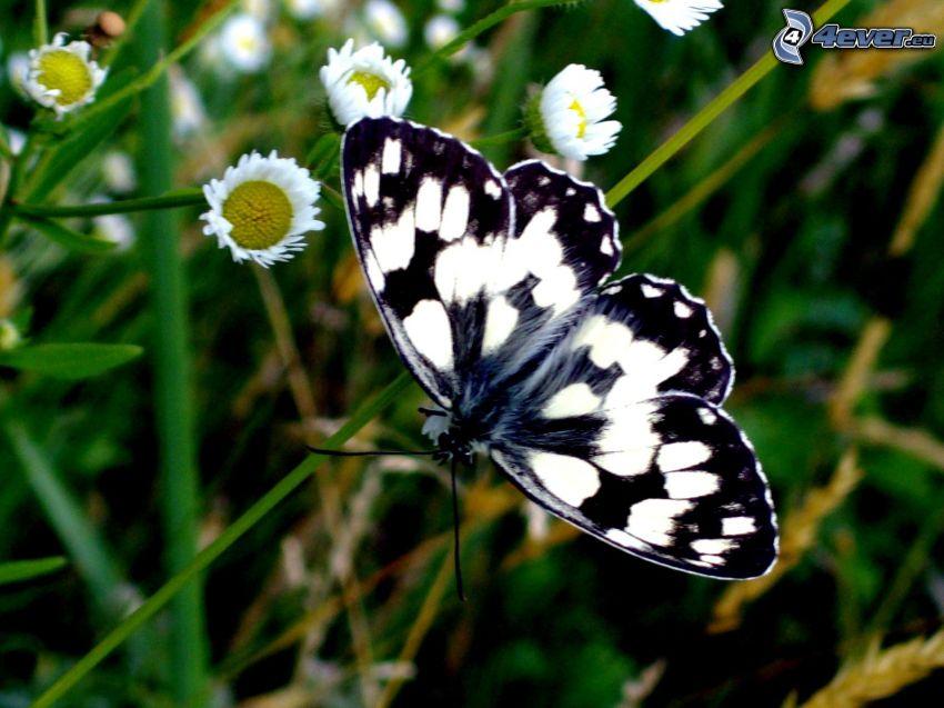 Fjäril på stjälk, gräs, blommor