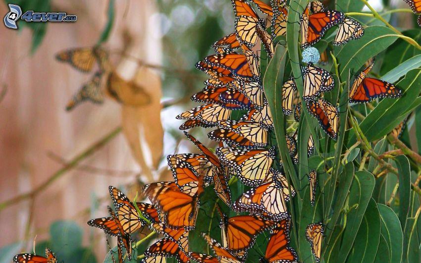 fjärilar, gröna blad