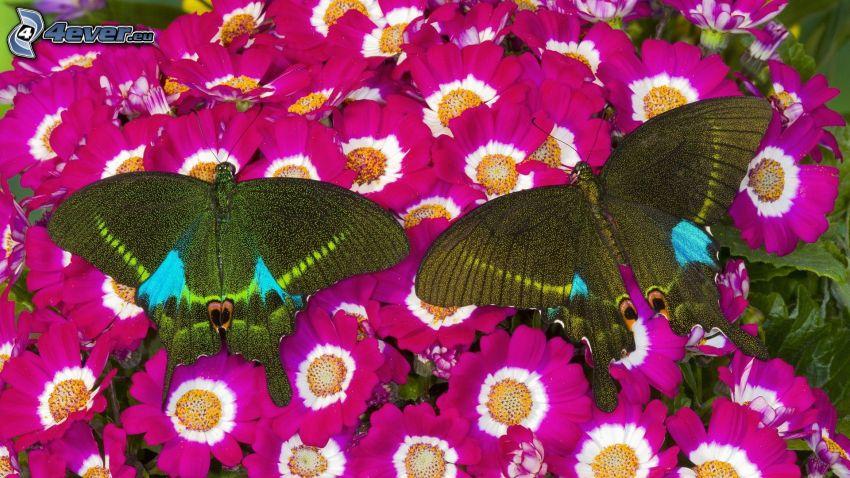 fjärilar, lila blommor