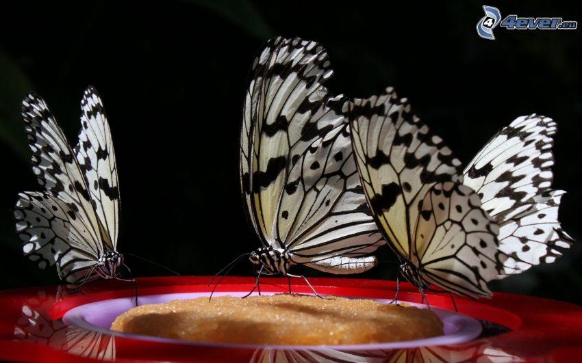 fjärilar, makro