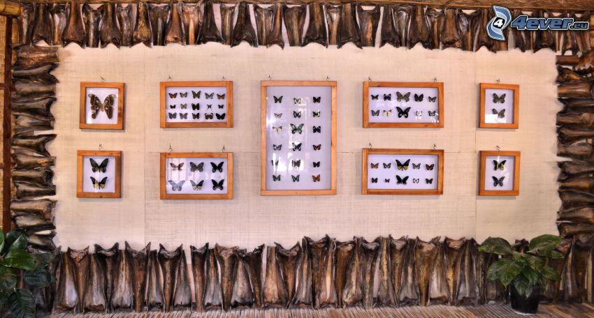 fjärilar, utställning
