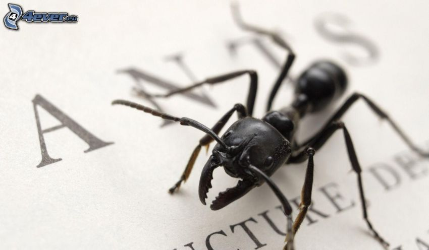 myra, papper, bokstäver, makro