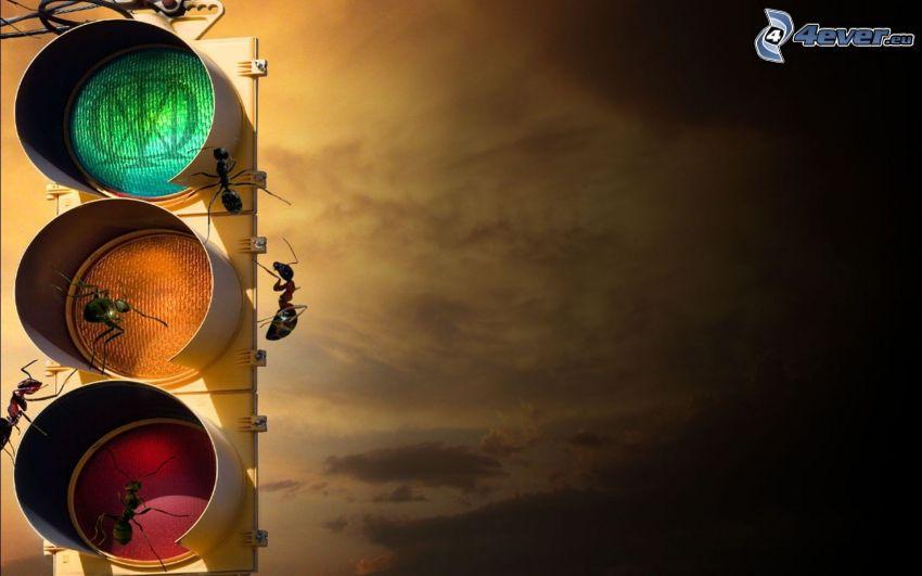 myror, trafikljus