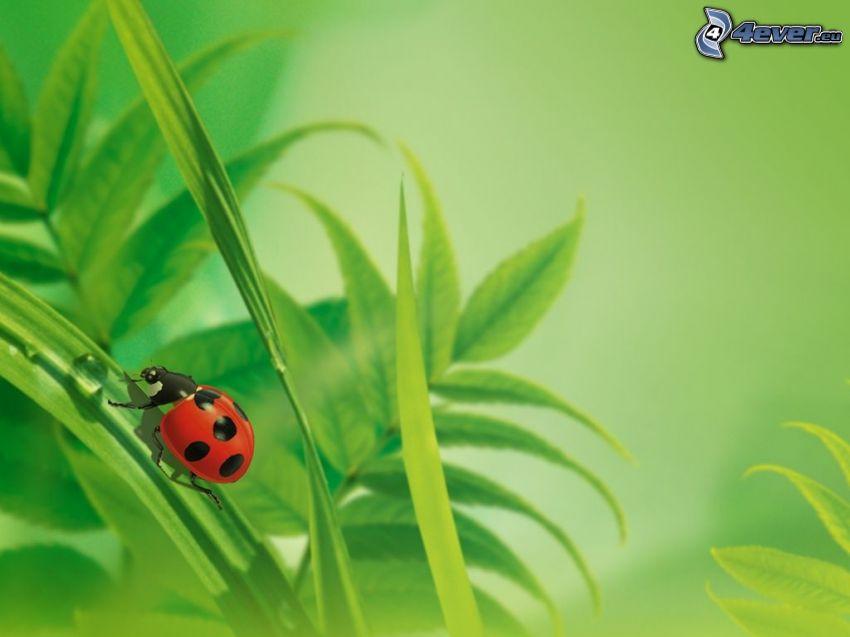 nyckelpiga, grässtrå