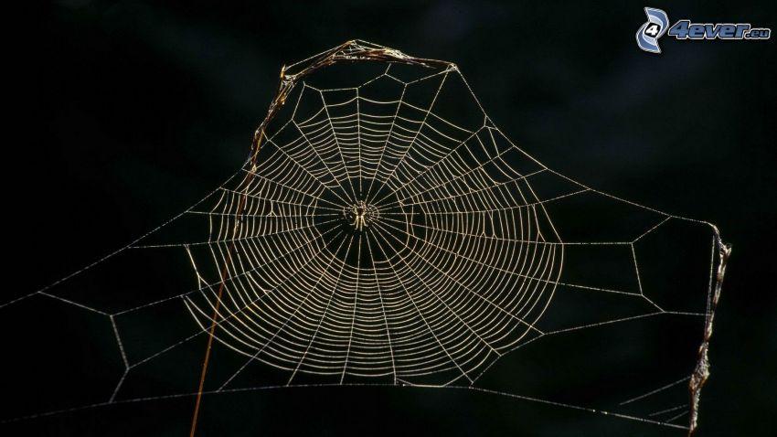 spindelnät, spindel