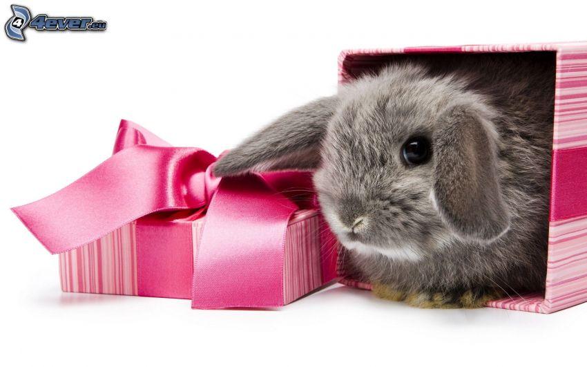 kanin, present