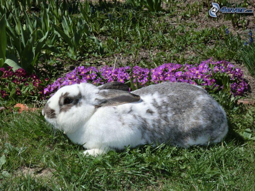 kanin på gräs