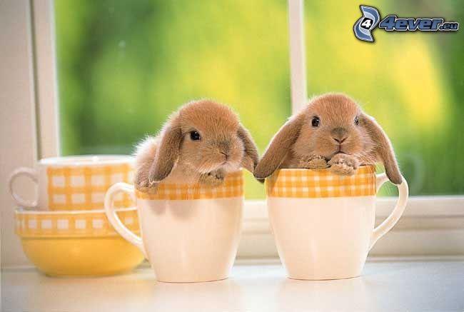 kaniner, glas