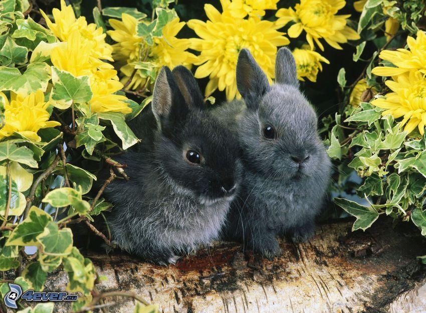 kaniner, gula blommor