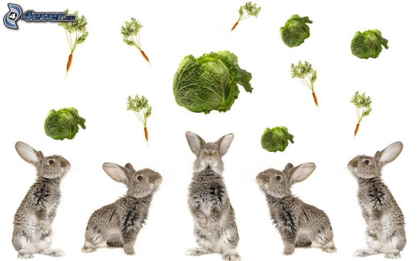 kaniner, kål, morötter